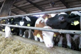 Odluka o potpori osnivanju i razvoju malih stočarskih farmi na području općine Prozor - Rama